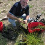 Alan is taking seedlings out of their container ready to plant