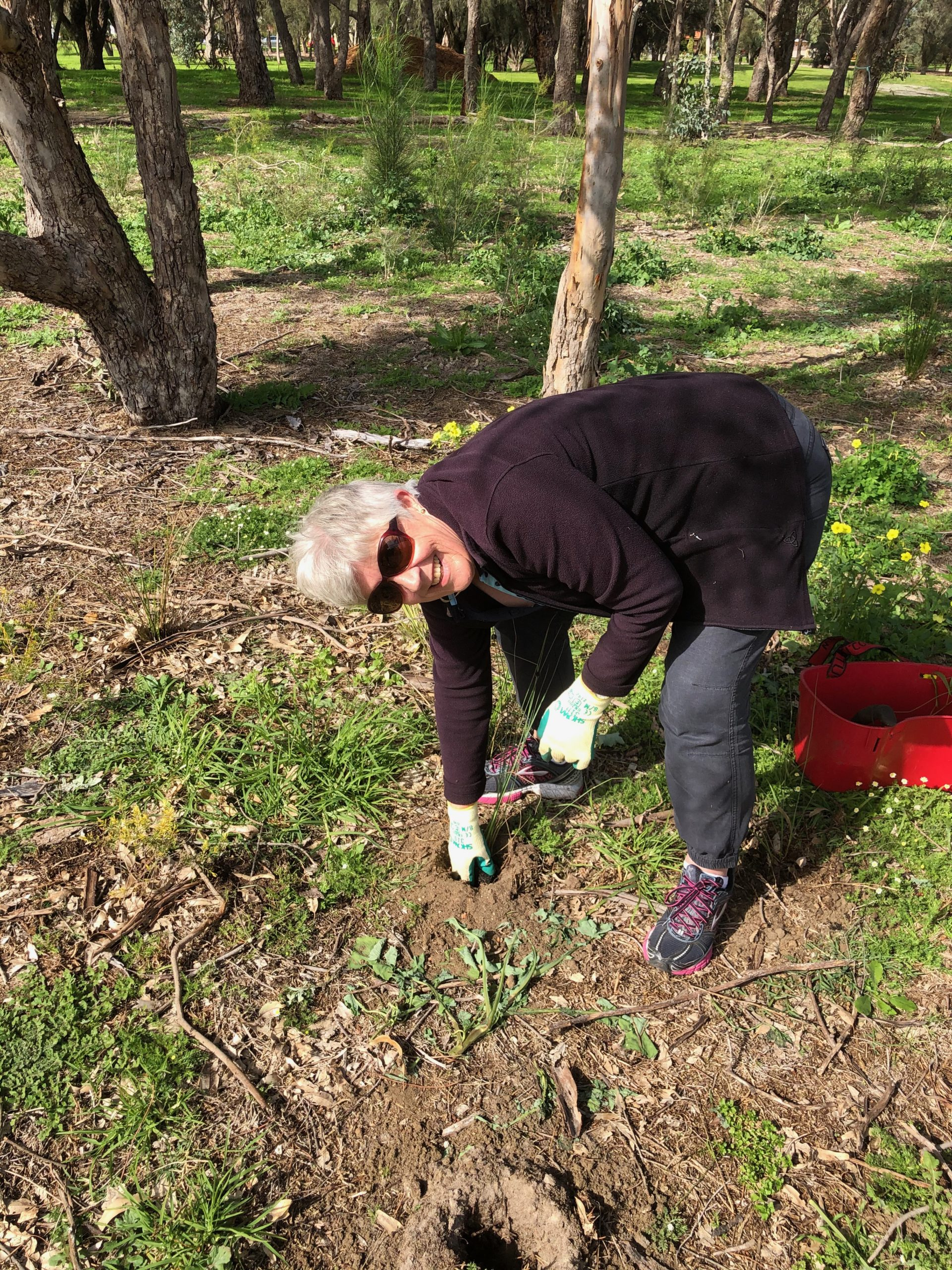 Glynis is bending over to plant a seedling